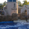 Balance! Standing on top of swimming dolphins at Sea World.