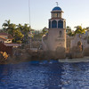 The Dolphin show at Sea World.