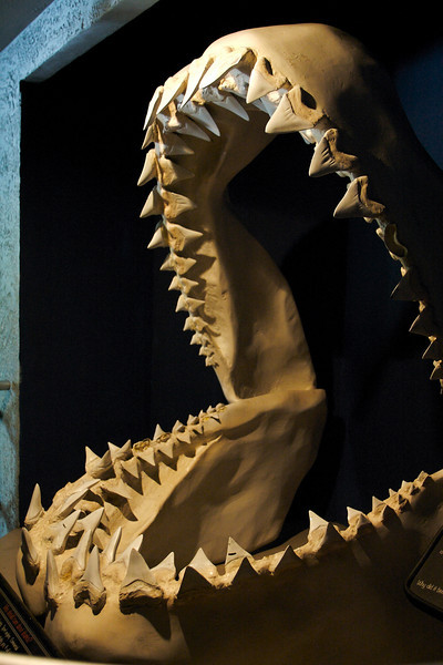Eric Cheng, you're going to need a bigger cage (and a time machine) when photographing the Megalodon!
