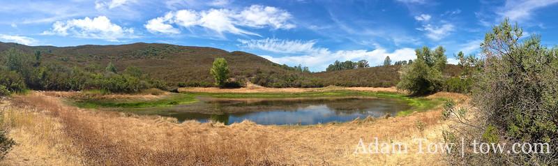 Frog pond.