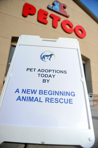 A New Beginning Animal Rescue puts on a adoption drive for pets of all ages. They offer pets at reasonable prices that have all their shots and licensing. At Petco , In Layton. On November 30 2013. (Brian Wolfer Special to the Standard-Examiner)