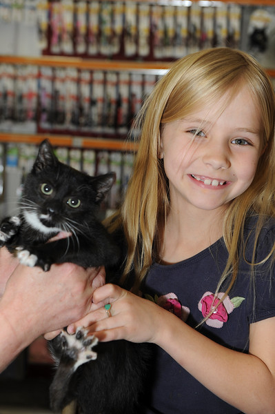 Young Sarah Mowers gets excited at the possibility on bringing a new kitty home. At a Layton Petco. On November 30 2013. (Brian Wolfer Special to the Standard-Examiner)
