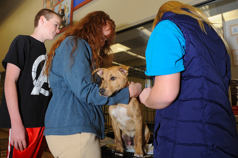 "The Trujillo family looks into adopting this puppy named ""Tron"" at Petco. A New Beginning Animal Rescue puts on a adoption drive for pets of all ages. In Layton. On November 30 2013. (Brian Wolfer Special to the Standard-Examiner)"