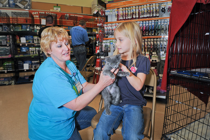 Gabi Johnson shows Sarah Mowers this little kitty at the adoption drive. At a Layton Petco. On November 30 2013. (Brian Wolfer Special to the Standard-Examiner)