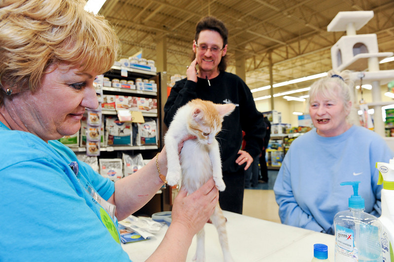Gabi Johnson gives a young kitty all of her shots and vaccinations. New owner Sheri Windberry is very excited about her new pet. At a Layton Petco. On November 30 2013. (Brian Wolfer Special to the Standard-Examiner)