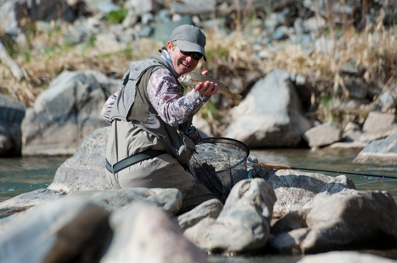 Charlie Card is looking to catch a Bonneville cutthroat trout. The fish will be scanned to determine if an electronic 'pit' tag has been implanted in the fish. If no tag is found, DWR fishery biologist will implant a tag so the migration of the fish can be tracked. In the Weber Canyon on April 11, 2015.