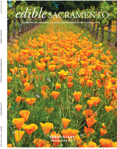 ESM_Issue_47_Cover Poppies