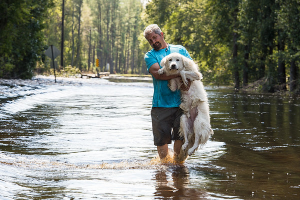Victor Flores a truck driver from Tampa, Florida, saves a dog from the Little Pee Dee River on September 19, 2018. John A. Carlos II