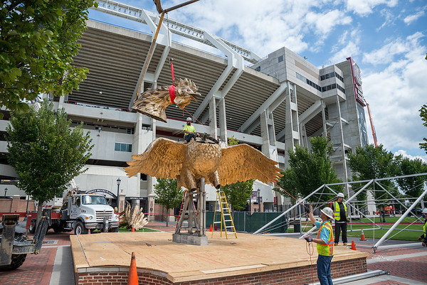 Construction workers erect a 800 square-foot gamecock sculpture outside of Williams-Brice Stadium in center of the Lloyd Family Courtyard, on Sept. 10, 2020. John A. Carlos II / Special to The Post and Courier