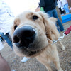 Dogswalk_RLoken_011_3049