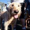Dogswalk_RLoken_050_3227