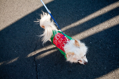 Dogswalk_RLoken_038_3177