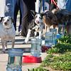 Dogswalk_RLoken_048_3218