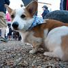 Dogswalk_RLoken_015_3062