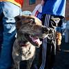 Dogswalk_RLoken_053_3249