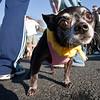 Dogswalk_RLoken_051_3231