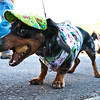 Dogswalk_RLoken_040_3186