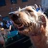 Dogswalk_RLoken_052_3247