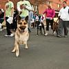 Dogswalk_RLoken_032_3161