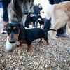 Dogswalk_RLoken_012_3053