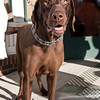 Dogswalk_RLoken_043_3201