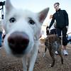 Dogswalk_RLoken_008_3042