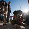 Dogswalk_RLoken_071_3332