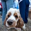 Dogswalk_RLoken_014_3060