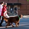Dogswalk_RLoken_034_3170