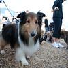 Dogswalk_RLoken_009_3044