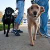 Dogswalk_RLoken_001_2998