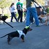 Dogswalk_RLoken_039_3183