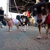 Dogswalk_RLoken_003_3007
