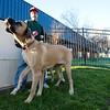Dogswalk_RLoken_002_3006
