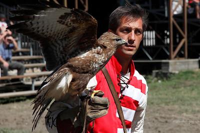 Falcon and Falconer — Solymász és a madara