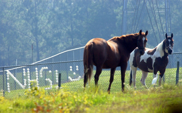 10:50 a.m. -- A pair of horses stand in a pasture next to the Newton High School baseball fields where a fan  has left a message made with styrofoam cups in a fence Friday morning.<br /> PHOTO/SCOTT ESLINGER                       OCT 1, 2004