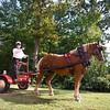 Horse_POB_RLoken_018_9594