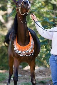 Horse_POB_RLoken_023_7897