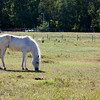 Horse_POB_RLoken_003_7853