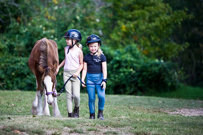 A young Clydesdale horse is led by two young girls.