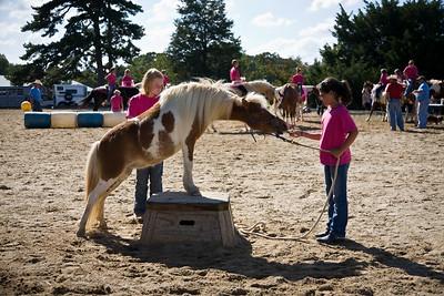 Horse_POB_RLoken_007_9574