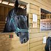Horse_POB_RLoken_011_9581