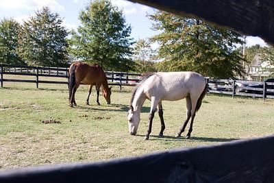 Horse_POB_RLoken_037_7927