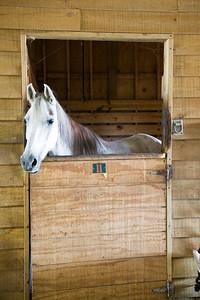 Horse_POB_RLoken_010_9580