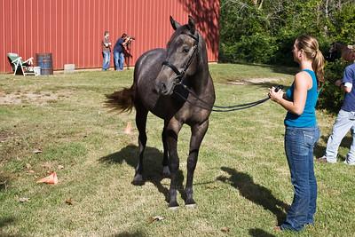Horse_POB_RLoken_029_9621