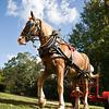 Horse_POB_RLoken_020_9598