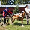 Horse_POB_RLoken_013_9585
