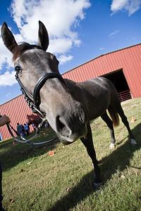 Horse_POB_RLoken_028_9618