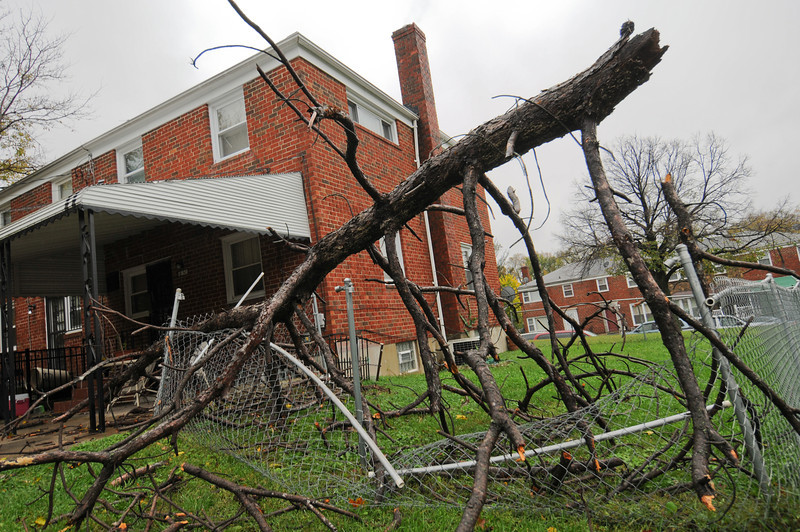 10.30.12- BALTIMORE,  MD- A downed tree, blown over by winds from Hurricane Sandy took out a chain link fence along Northern Parkway in Baltimore City.  (Maximilian Franz/The Daily Record).