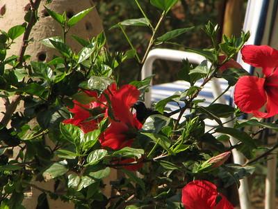 Madár a virágok között